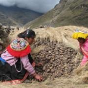 Pérou – Le pays de la pomme de terre, on dit même qu'il y a autant de jours dans un an que de sortes de pommes de terre