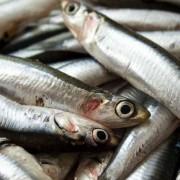 Acciaroli – province de Salerne en Italie : 1000 habitants dont 300 centenaires – Anchois et romarin régulièrement inclus dans leur régime alimentaire