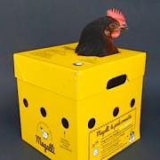 » Hobby Farming » – la grande tendance qui s'installe en France – Allez vous adopter votre poule et ramasser vos oeufs ?