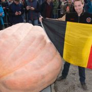 Concours de citrouilles XXL, un Belge bat le record du Monde !
