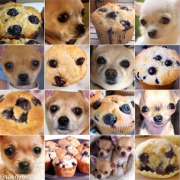 Ces animaux sont tellement FOOD ! Chihuahua / Muffin, Chiot / Bagel, Shiba / Marshmallow,…