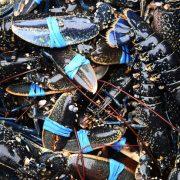 Le homard Bleu – une fierté française