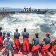 Le chef Dani Garcia assiste à la pêche au thon rouge dans le Détroit de Gibraltar, découvrez la pata negra de la mer !