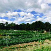 Dans le potager de l'Auberge de L'ill – Le 17 août la 1ère édition de la Journée du Jardin