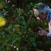 La Quête d'Alain Ducasse – le long-métrage sortira en salle le 11 octobre prochain