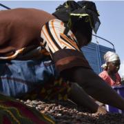 Guerre économique du cacao – les grands noms du chocolat participent indirectement à la déforestation
