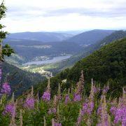 Les Vosges, un savoir-faire au pays du luxe