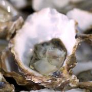 Des huîtres au goût de framboises … vous y croyez ?