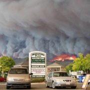 Napa Valley, après la désolation des pires incendies de toute son histoire, il faut que la vie reprenne