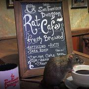 Ces rats qui empoisonnent les restaurants à New York