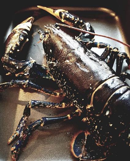 la suisse interdit la pratique de la cuisson des homards qui consiste les plonger vivants dans. Black Bedroom Furniture Sets. Home Design Ideas