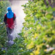 Près de 75 % des fruits et 41 % des légumes non bio portent des traces de pesticides