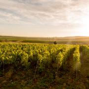 1er des Dîners de vignerons 2018 de Maison Rostang – mercredi 28 février