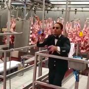 Salt Bea – symphonie orchestra dans un abattoir en Turquie