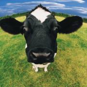 Quand les Vegans se comportent de façon extrême – bouchers et charcutiers doivent faire face à des agressions