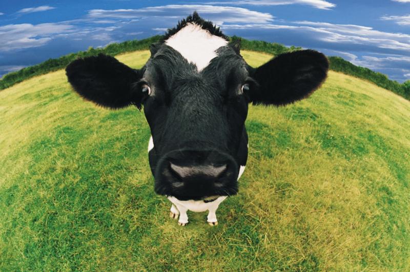 agression boucher vegan