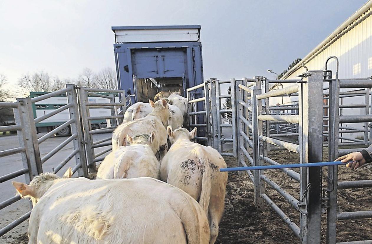 viande bovine francaise en chine