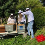 Première récolte de miel pour la Maison Bocuse