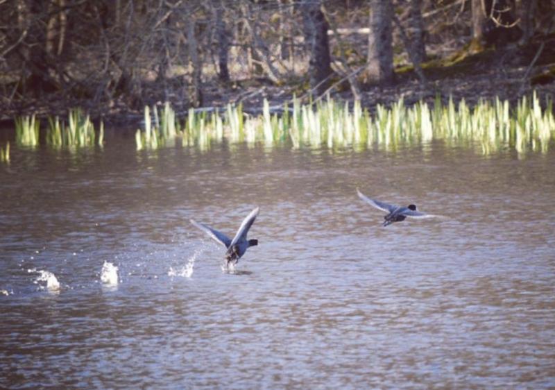 especes oiseaux protegees en france