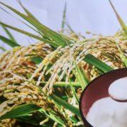 Komeko – cette farine de riz qui permet de faire du vrai pain sans gluten, et offre de nombreux avantages culinaires