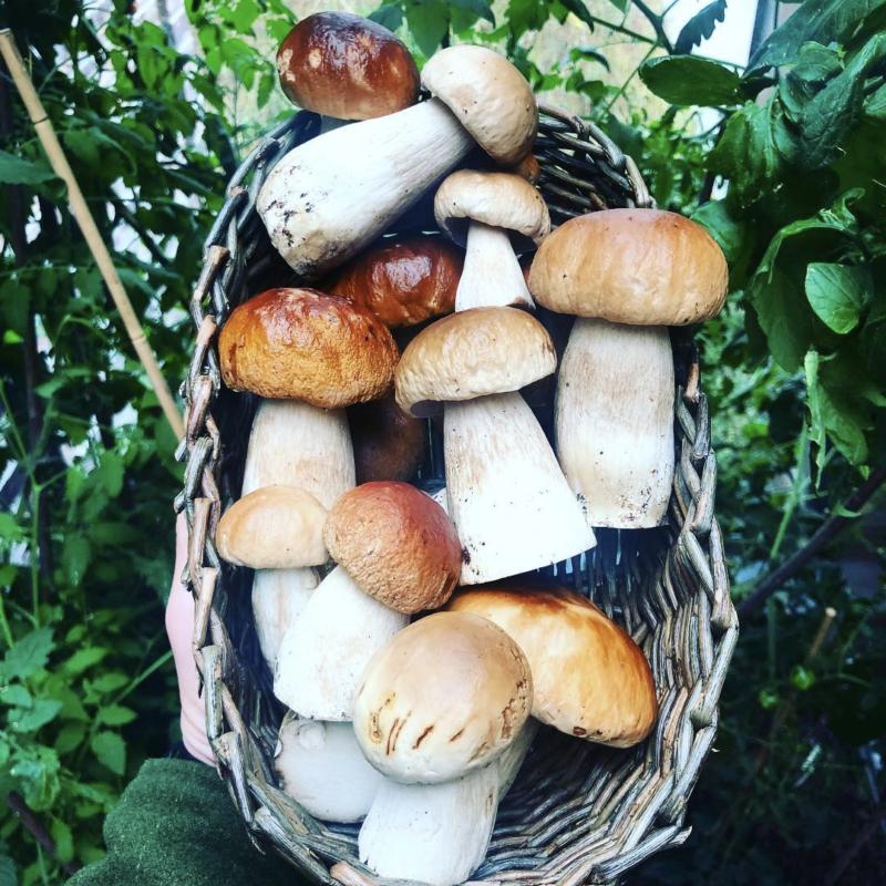 panier champignons