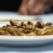 Insectes – L'option de consommer des insectes pour nourrir une partie de la planète mis à mal par l'agriculture intensive qui menace d'extinction de nombreuses espèces