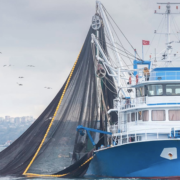 Le 30 juin 2021 la pêche électrique sera enfin interdite définitivement dans les eaux Européennes