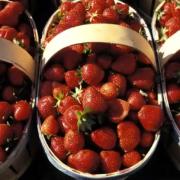 Il faut sauver la fraise de Carpentras – »La création d'une identité géographique protégée est indispensable«