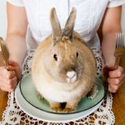 Pourquoi n'arrivons-nous pas à manger la viande d'un animal symboliquement trop proche ? – elle est liée à la distance entre le consommateur et l'animal