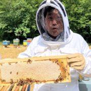 Les chefs et les produits de la ruche – Une histoire d'amour des abeilles à l'assiette !