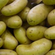 C'est la première fois qu'un lot de pommes de terre nouvelle est retiré du marché – taux de pesticides trop élevé