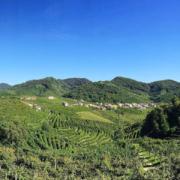 Italie – Les collines de production du Prosecco inscrites au Patrimoine Mondial de l'Unesco