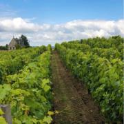 – 20 % en un an … comment le vin de Bordeaux à perdu la côte … et ses rêves