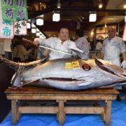 1,5 million d'euros (193 millions de yens) pour un thon de 276 kilos
