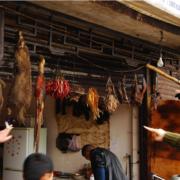 Les animaux sauvages réapparaissent sur les marchés en Chine