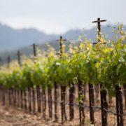 #jaimemonvigneron : le soutien de la filière vin en action