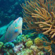 8 juin – Fête des mers et des océans – Journée mondiale de l'océan – Les Relais & Châteaux s'engagent