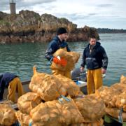 Départ pour la pêche à la Coquille SaintJacques en baie de Saint-Brieuc