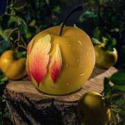 Une Bûche, Un Jour – «L'oiseau de feu» par Stéphane Arrête – Hôtel Royal Evian