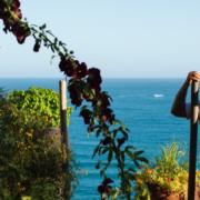 Et si vous plantiez un arbre dans le jardin de Mauro Colagreco !