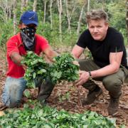 Consommation de stupéfiants dans l'univers de la Food… Gordon Ramsay dénonce