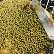 Le caviar à la spatule ! Vous en rêviez, Yannick Alleno en a fait sa signature !