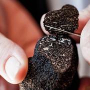 La truffe noire à prix coûtant dans les restaurants parisiens du chef Alain Ducasse