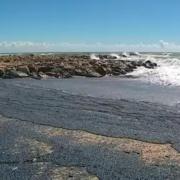 Cette semaine la plage de Palavas recouverte de Méduses échouées … savez vous que certaines se consomment ? … des grands chefs s'y sont essayés