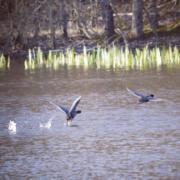especes oiseaux protegees