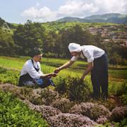 De la graine à l'assiette… découvrez le beau livre – Jardins de Chefs – paru aux éditions Phaidon