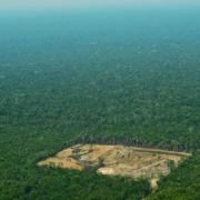 Pour contribuer à préserver la planète il faudrait replanter beaucoup d'arbres … mais les replantations ne remplaceront jamais les forêts primaires