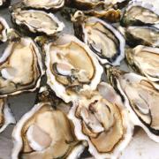 Alerte à la gastro après avoir consommé des huîtres dans l'ouest de la France