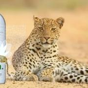 Sri Lanka : Le Café Français & OLU Water viennent en aide à la préservation des Léopards sur l'île dans leur milieu naturel.