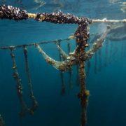 L'UE lance «Taste the Ocean», l'initiative dédiée à la pêche durable avec les recettes de 9 grands chefs européens